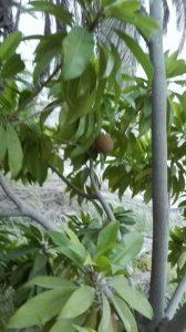 گزارش تصویری از محصولات چیکو در روستای ماشکار